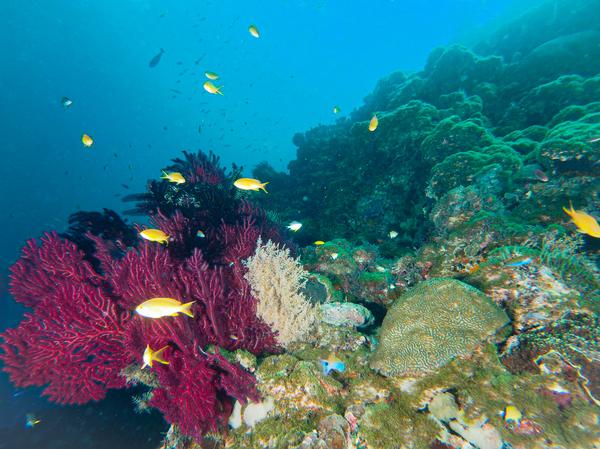 フィリピン水中_200210_0042.jpg
