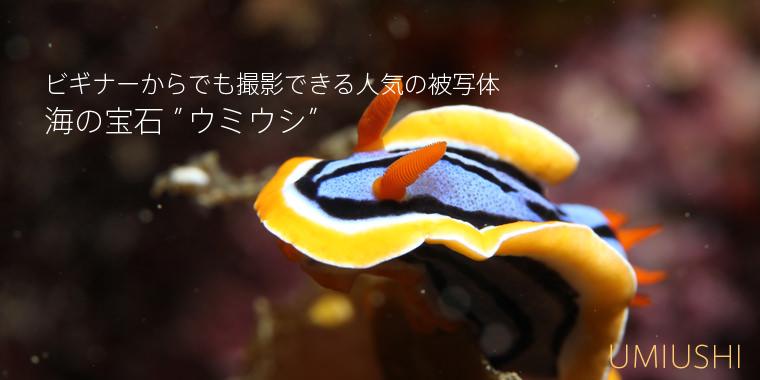 umiushi01.jpg